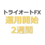 トライオートFX運用開始2週間目